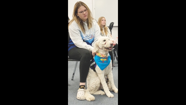 """Bernice, the Northwood-Kensett district's first canine staff member, has been happy to meet all the students that she will """"work"""" with throughout the school year. Bernice has completed her own lessons to become a therapy dog and students have been meeting her in that official and effective capacity recently. Ava Woltzen is pictured with Bernice  as she accompanied secondar counselor Amy Hansen in the classroom."""